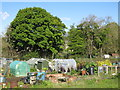 NY9038 : Allotments in Westgate by Mike Quinn