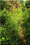 SX9066 : Path, Nightingale Park by Derek Harper