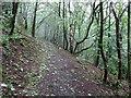 SO7642 : Woodland path on the Malvern Hills by Philip Halling