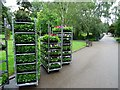 SP3165 : Bedding plants about to be planted by Philip Halling