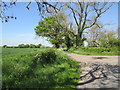 SE8227 : Bellasize  Lane  and  Mill  Lane  junction by Martin Dawes