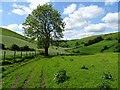 SO1553 : Ash tree in Cwm Shenkin by Philip Halling