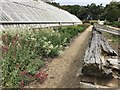 TF8742 : Path between the glass houses in the walled garden at Holkham Hall by Richard Humphrey
