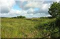 SX6794 : Field by Scarhill Cross by Derek Harper