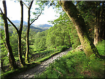 SH6251 : View over a track in Nantgwynant by Gareth James