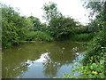 TL1621 : Village pond, Bendish, St Paul's Walden by Humphrey Bolton