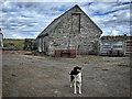 ND3968 : Friendly farmyard dog by Mick Garratt