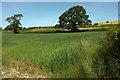 SS7427 : Towards Bicknor Farm by Derek Harper