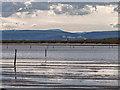 NH9863 : WW2 Anti Gilder Posts Culbin Sands by valenta