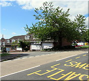 ST3091 : July view of a deciduous tree on a Malpas corner, Newport by Jaggery