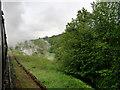 SE0438 : KWVR Trackside near Damems by David Dixon