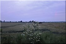 TL2764 : Field by Ermine Street, Papworth St Agnes by David Howard