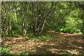 SX9066 : Woodland, Nightingale Park by Derek Harper