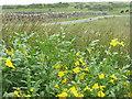 NX4956 : Monkeyflower near Bagbie Sheds by M J Richardson