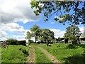 NZ1056 : Ponies at Broad Oak Farm by Robert Graham