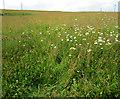 SJ9792 : Meadow on Idle Hill by Stephen Burton