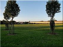 SJ5990 : Dallam Recreation Ground by David Dixon