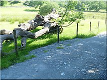 NY3304 : Elterwater to Skelwith Bridge [4] by Michael Dibb