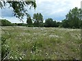 SK4546 : Flowery field, south of Langley Mill by Christine Johnstone