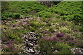 NY2100 : Heather and Ferns by Peter Trimming