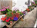 SS9746 : Nice cottage floral display, Quay Street by Roger Cornfoot