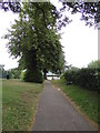 TM1179 : Path at Diss Park by Adrian Cable