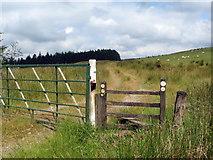 SS8393 : Llwybr i Afan Argoed / Path to Afan Argoed by Alan Richards