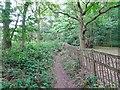SO8786 : Woodland Path by Gordon Griffiths