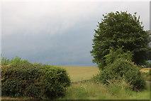 SU2860 : Field by Piccadilly, Marten by David Howard