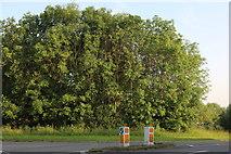 SP9781 : Trees by Main Street, Lowick by David Howard