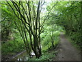 SO9303 : Thames and Severn Canal in Siccaridge Wood by Christine Johnstone