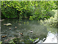 SE2041 : The Old Mill, Miry Lane, Yeadon - mill pond by Stephen Craven