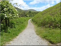 NY2725 : The descent from Latrigg [8] by Michael Dibb