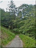 NY2724 : The descent from Latrigg [13] by Michael Dibb