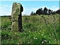 NS5876 : Craigmaddie Muir by Raibeart MacAoidh