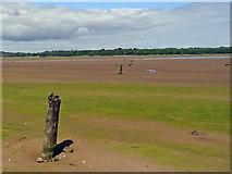 NT6378 : On Hedderwick Sands by Adam Ward
