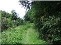 SE7566 : Woodland path by David Brown