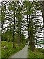 NY1715 : Path through Burtness Wood by Graham Hogg