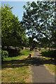 SX9265 : Millennium Green, St Marychurch by Derek Harper