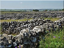 SK2076 : Limestone walls by Tideswell Lane by Neil Theasby