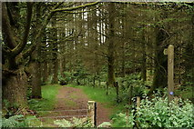 SH6441 : Path to Tan-y-bwlch Station by Peter Trimming
