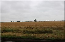 TM0760 : Field by Church Road, Stowupland by David Howard