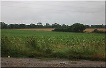 TM2463 : Field by Saxted Road near Earl Soham by David Howard