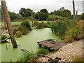 SO7204 : Wader Shore, Slimbridge Wetland Centre by David Dixon