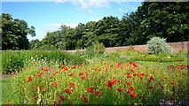 NZ1758 : Walled garden, Gibside by Mark Percy