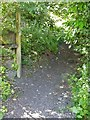 NY3603 : Path leaves the road [1] by Michael Dibb