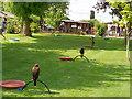 SO7023 : International Centre for Birds of Prey - The Hawk Walk by David Dixon