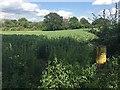 SP2268 : A public footpath crosses a field of beans, Haseley by Robin Stott