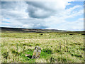 NY9940 : Inscribed stone on grassy moorland by Trevor Littlewood