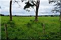 H5471 : A large field, Bracky by Kenneth  Allen